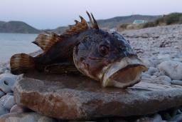 Рыбалка на Будванской ривьере : Боко-Которская бухта, Черногория