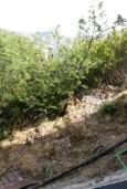 Вид. Рафаиловичи, Черногория, Рафаиловичи : Студия с балконом в 120 метрах от моря